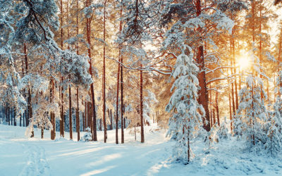 Ayurveda Winter Tipps