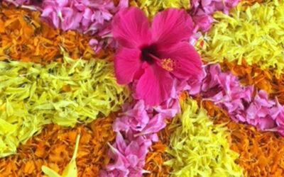 Kräuter und Gewürze im Ayurveda