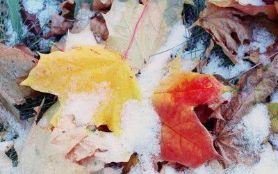 Herbsttipps