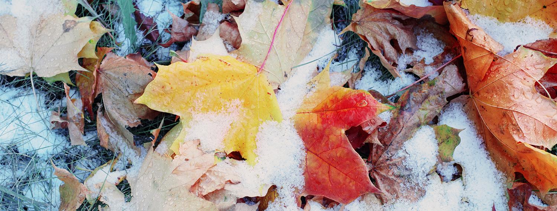 Herbst Blätter im Schnee