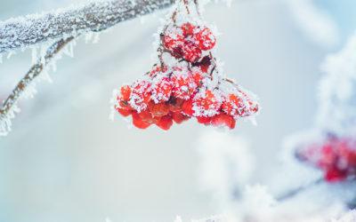 10 Tipps gegen Frieren – Ayurveda hält Sie warm